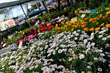 8 ιδανικά λουλούδια για το μπαλκόνι μου μόνο με 16 ευρώ