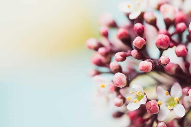 Ταπετσαρία Κλαδί Δέντρου Ροζ