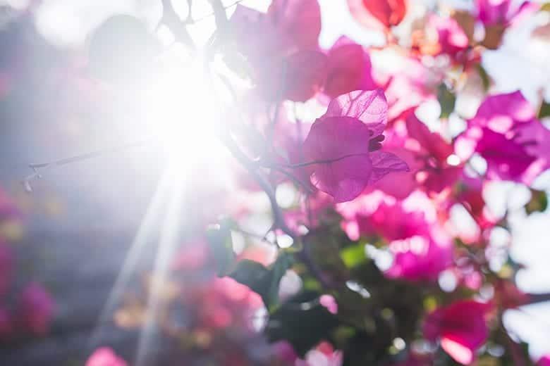 Τοπίο Άνοιξη Λουλούδια