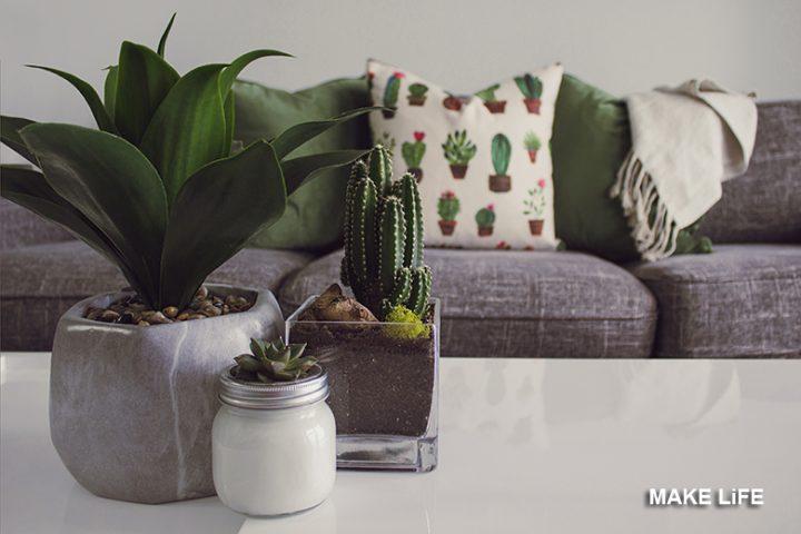 10 φυτά εσωτερικού χώρου ανθεκτικά και ιδανικά για διακόσμηση