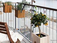 Διακόσμηση βεράντας. 7 δέντρα κατάλληλα για γλάστρα